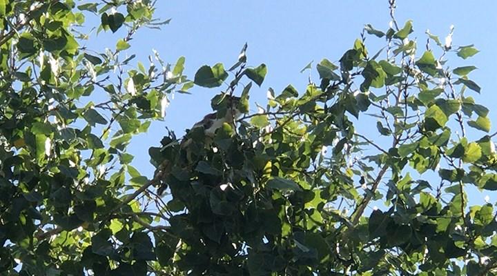 3 gün ağaçta mahsur kalan kedi, itfaiye gelince kendiliğinden inip gitti