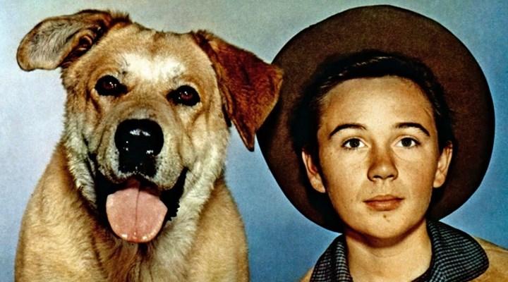 Old Yeller'ın çocuk yıldızı Tommy Kirk yaşamını yitirdi