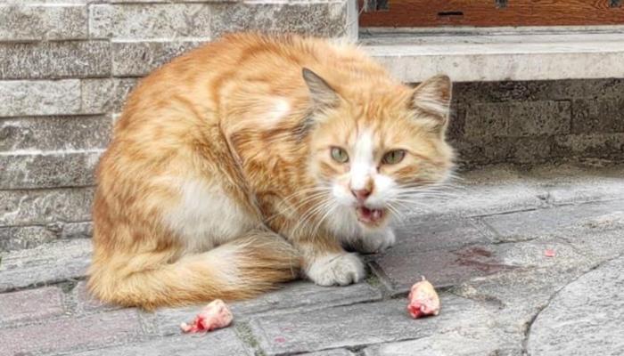 Sokak kedisine fakirlik kağıdı istedi, şaşkına çevirdi