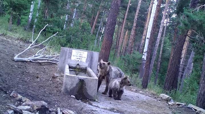 Yozgat'ta yaban hayvanları su içerken görüldü